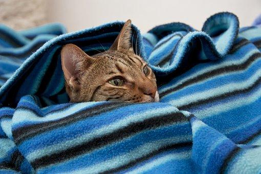komfortowe koce bawełniano akrylowe